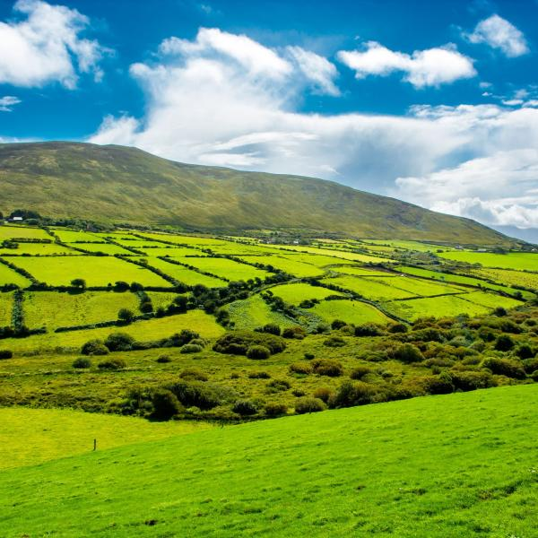 An Irish Field