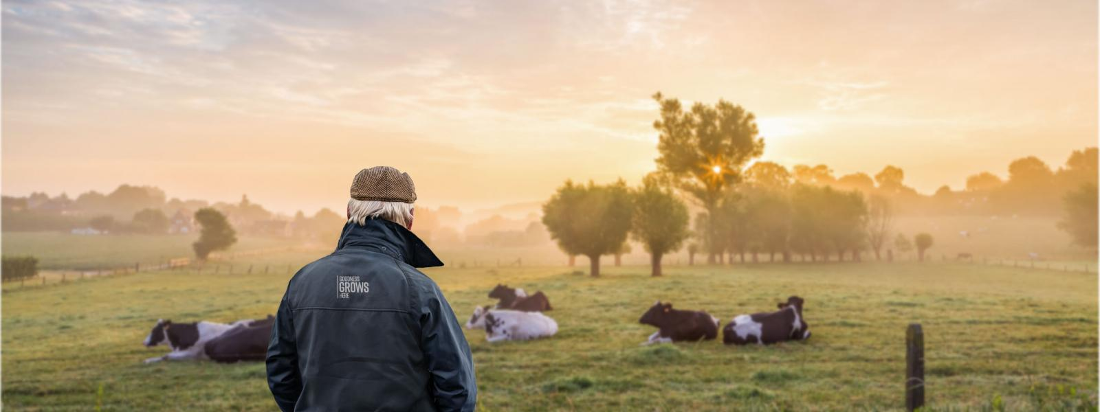 Image of a farmer with his back to the camera looking out at his field of cows